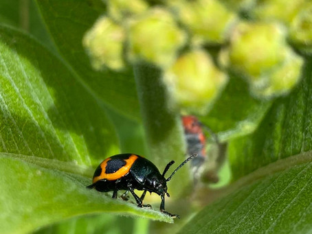 Weeds and Insects: The Unsung Heroes of our Backyards.