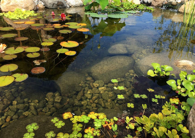 Well Planted Ecosystem Pond