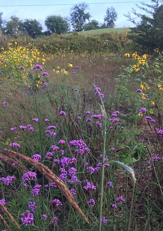 Meadow Garden in the Fall