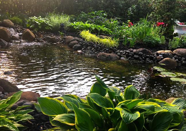 Lush Plantings Pond-side