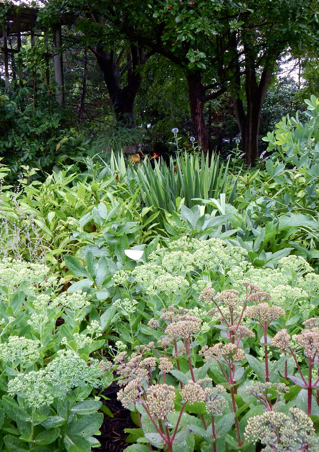 Dense plantings with Sedum, Baptisia and Yucca