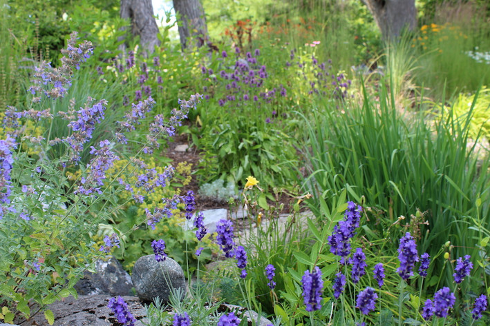 Naturalistic Garden - Hastings Ontario