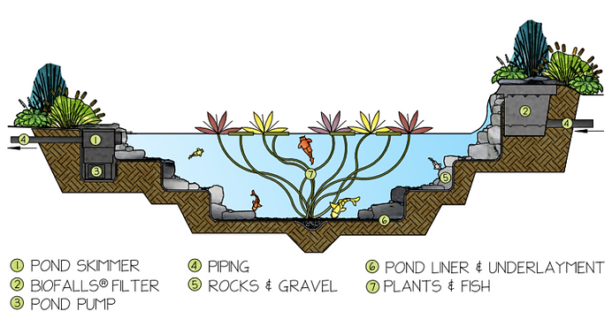 How it Works - Ecosystem Pond: skimmer, biofalls, pump, piping, rocks and gravel, pond liner and underlayment, plants and fish