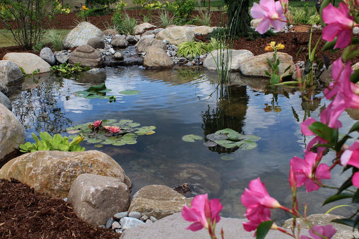 11 x 16 Ecosystem Pond, Trenton Ontario