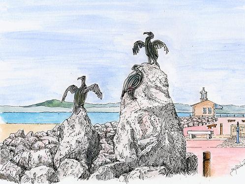 Stone Jetty Cormorants mounted print