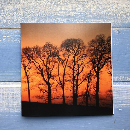 Greeting card, Tall Trees Sunset. 56