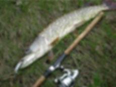 fishing_fish1.jpg
