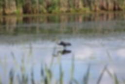 blue-heron-3562721_1920.jpg