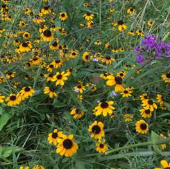 Native flowers provide food for pollinators.