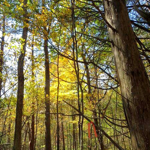 Woods_edited.jpg