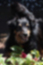 Murphy -Visiting Pets.JPG