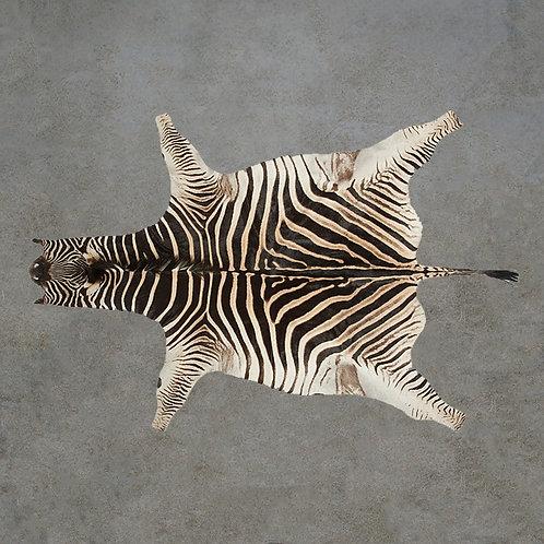Burchell's Zebra Hide