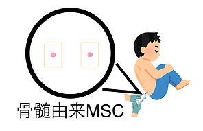 骨髄由来MSC