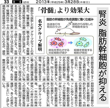 2013年、脂肪由来幹細胞の研究成果が新聞に掲載されました