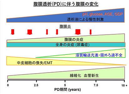 腹膜透析(PD)に伴う腹膜の変化