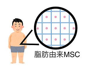 脂肪由来MSC