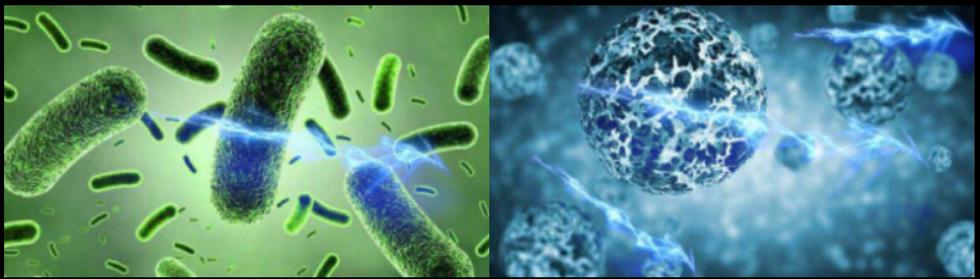 Sistem MESP omoara virusii si bacteriile