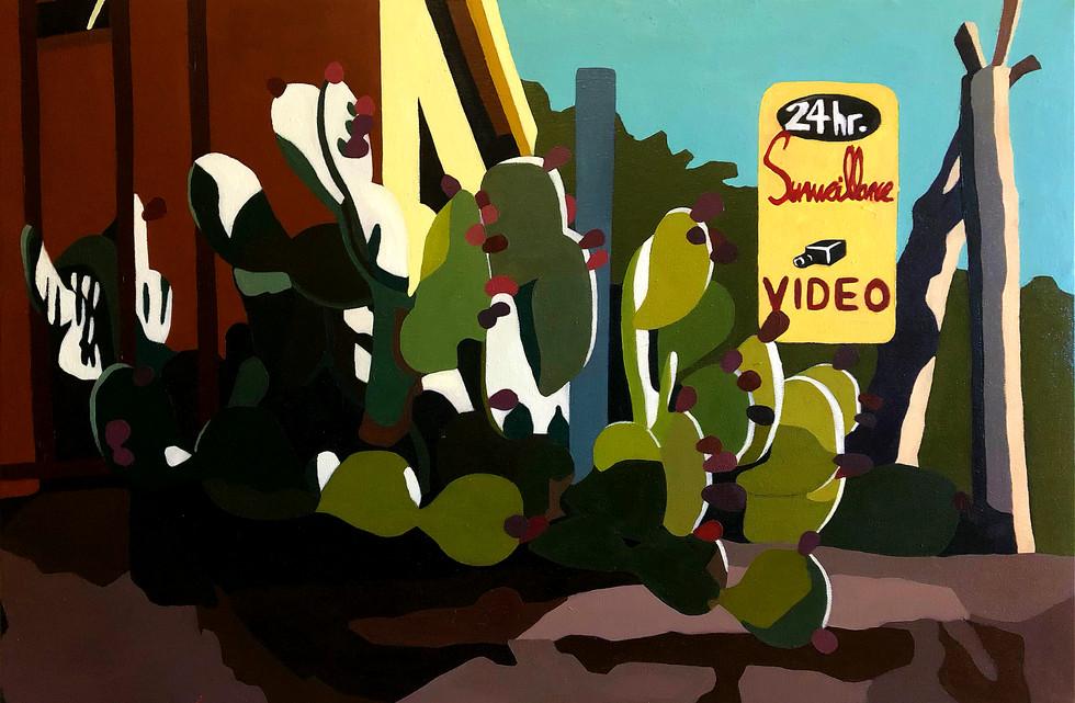 24 hr Cactus Surveillance