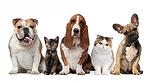 Pet Care UAE