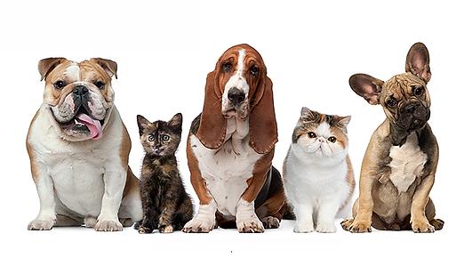 pet care services dubai