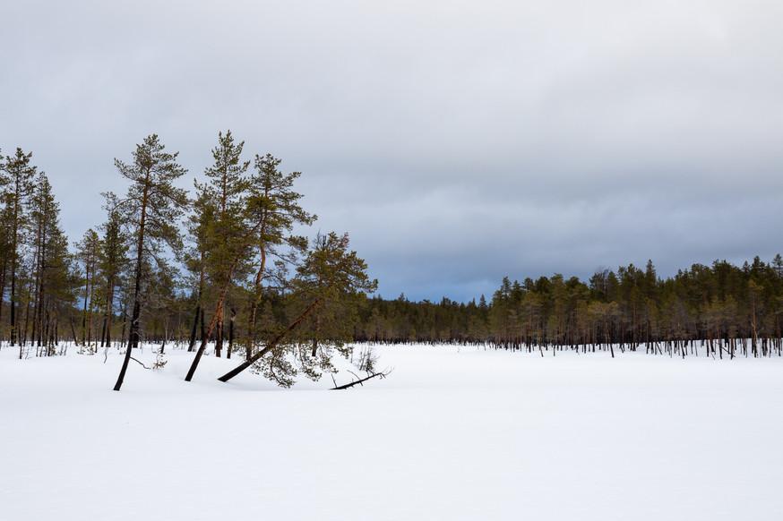 Lapland (11 of 43)
