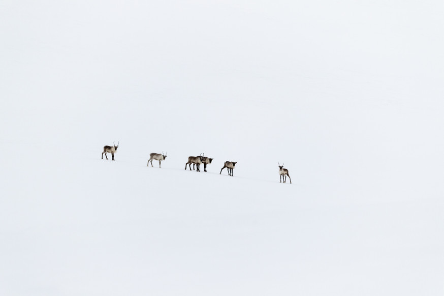 Lapland (37 of 43)