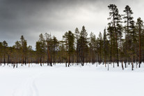 Lapland (12 of 43)