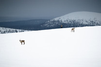 Lapland (35 of 43)
