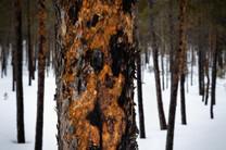 Lapland (13 of 43)