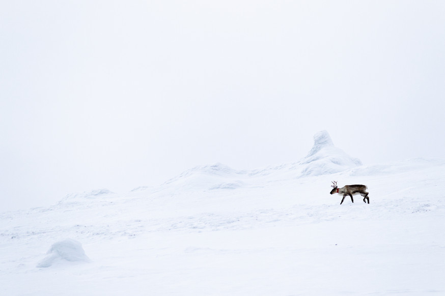 Lapland (25 of 43