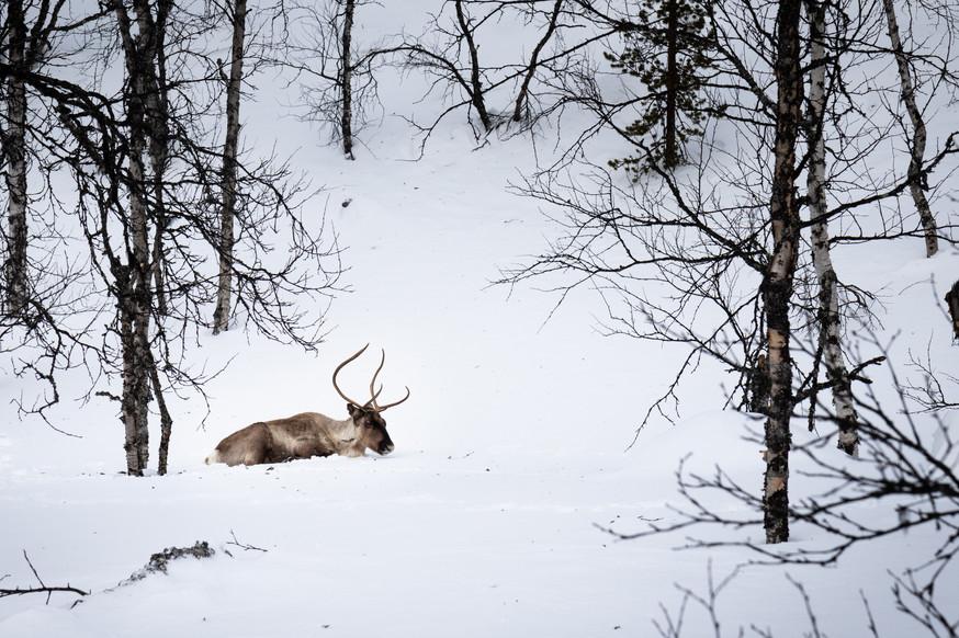 Lapland (14 of 43)