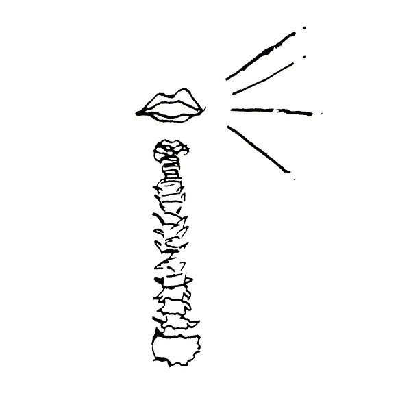 A black and white line drawing of the bones of the spine and lips floating above