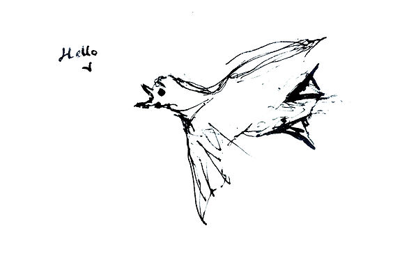 a black and white line drawing of a ptarmigan flying, with a speech bubble saying Hello
