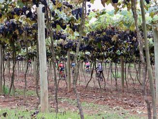 Degustação de vinho e passeio de bicicleta no interior de São Paulo