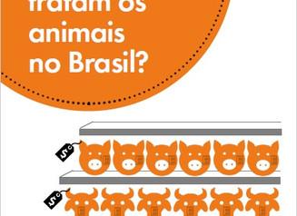 ONG cria guia de consumo consciente para orientar população sobre bem-estar animal