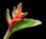 AdobeStock_4414935_edited_edited.png
