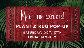 Plant & Rug Pop-Up!