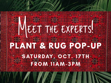 Plant & Rug Pop-Up!