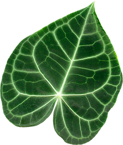 Verrigated.leaf.png