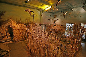 Museum Waterfowl Wing