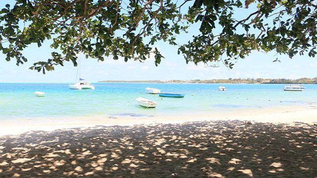 #mauritius #paradise #nature #beach