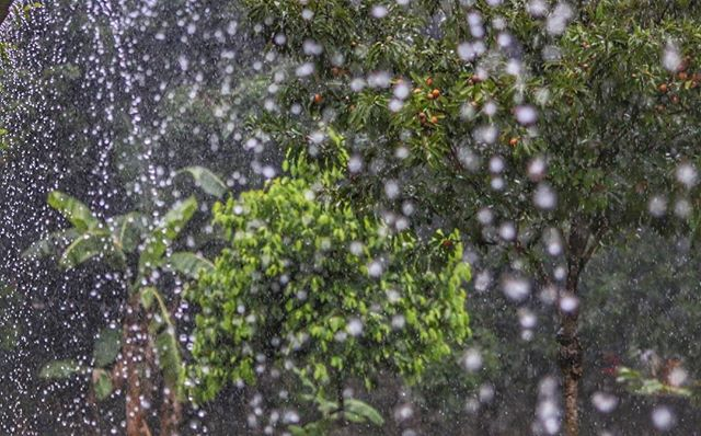 #monsoon #rain #highshutterspeed #beauty #nature