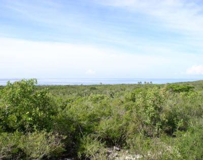 Bahama Sound 2