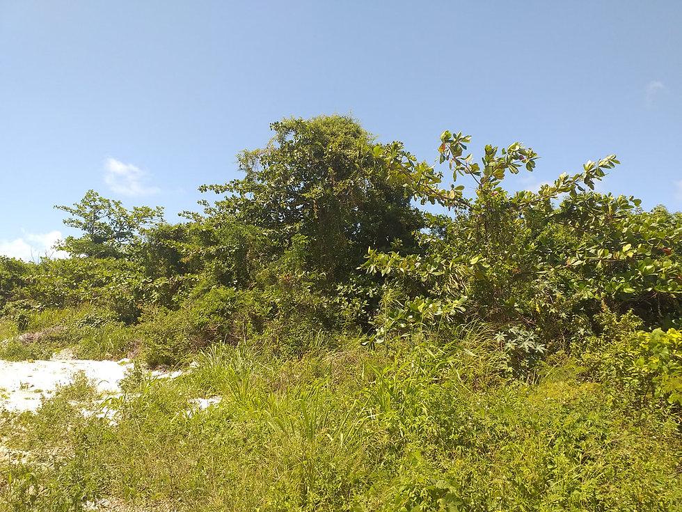 Croton Road