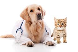 dog cat dr