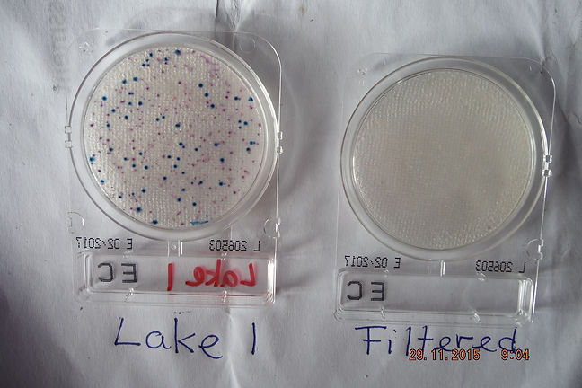 DSCF2192 test results. Microbes cultured