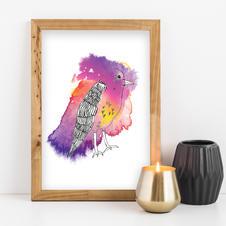 Bird - Abid Ali
