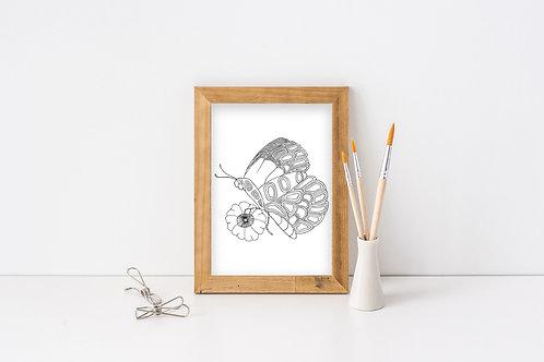 Butterfly - Wentworth Design