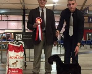 "Our New pup ""Kerry"" wins Best Pup in Show at Ulster Kerry Blue Club Show."