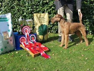 Carliams Irish Terriers Wins Best Junior Dog at Crufts 2016!